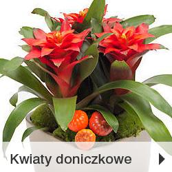 Rośliny doniczkowe Poczta Kwiatowo-Upominkowa