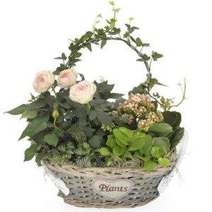 """""""Różowy ogródek"""""""